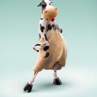 Bimbo Wraps - Cow