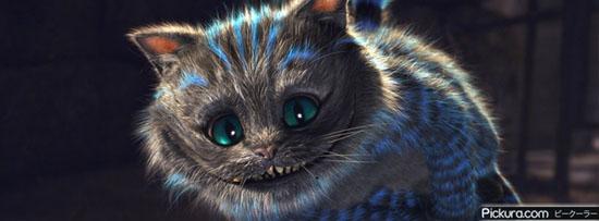 Blue Cat 50 Adet Facebook Kapak Resmi