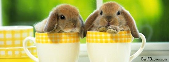 Cute Bunny 50 Adet Facebook Kapak Resmi