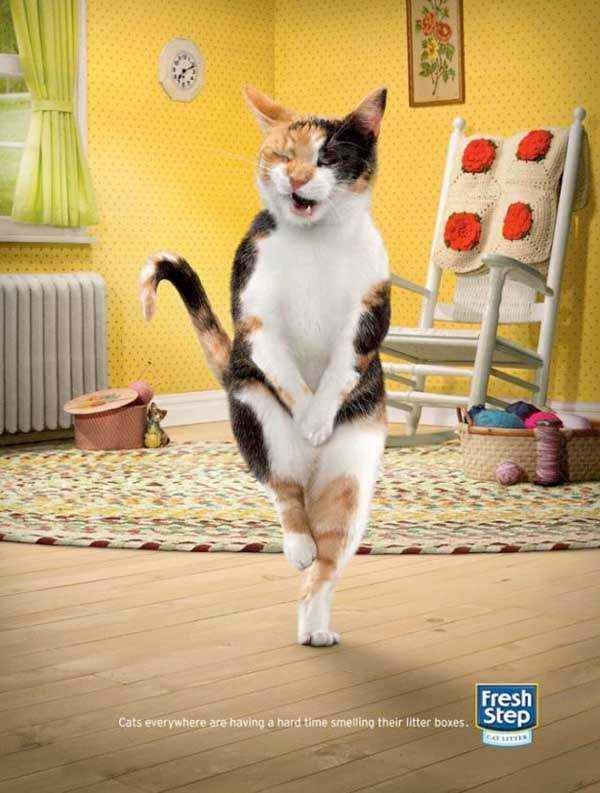Fresh Step: Cross-legged cats