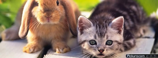 Kitten And Rabbit Pets 50 Adet Facebook Kapak Resmi
