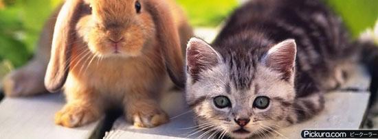 Kitten And Rabbit Pets