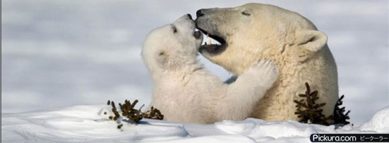 Loving Polar Bears