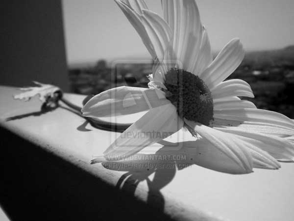 Panoramic Flower by Ryh-Chan