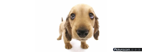 Puppy Dog Eyes 50 Adet Facebook Kapak Resmi