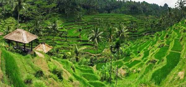 Rice Terrace Panorama by Tyler Huston
