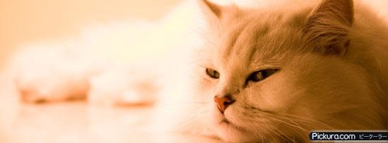 Sweet Honey Cat