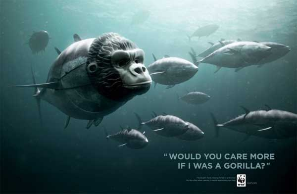 WWF Bluefin Tuna overfishin -Gorilla