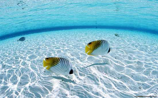 10-tropical_fish-1280x800