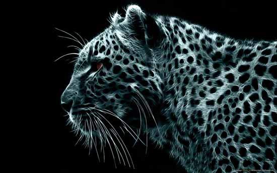 17-monochrome_leopard-1280x800