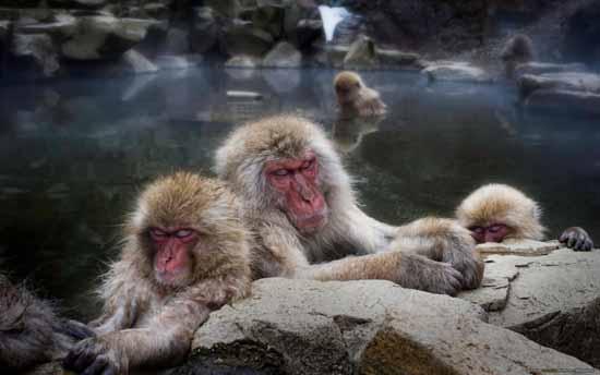 8-monkeys_in_the_hot_tub-1280x800