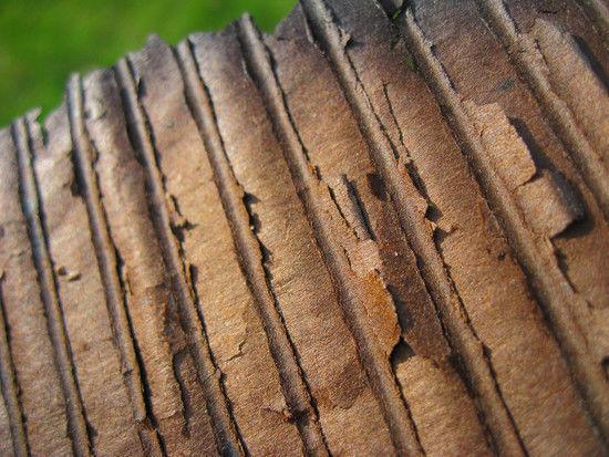 Burnt Cardboard texture