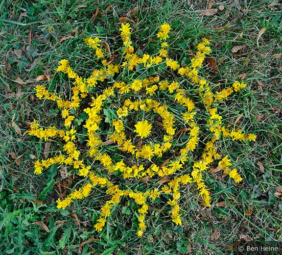 Abstract-Composition-with-Yellow-Flowers-10