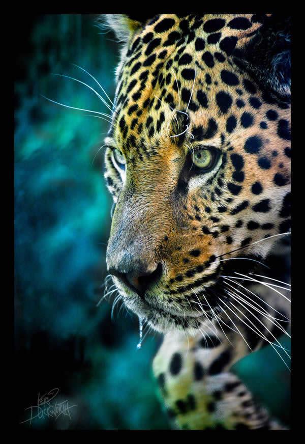 AmazonRainforestPhotos
