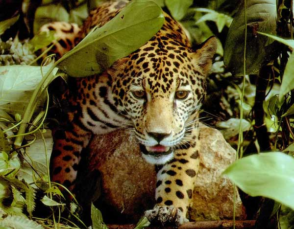 AmazonRainforest-36