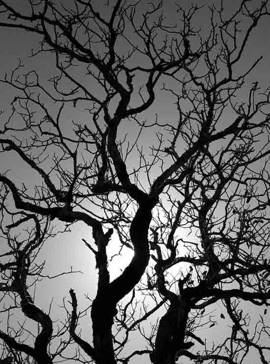 Autumn tree Black and white photography