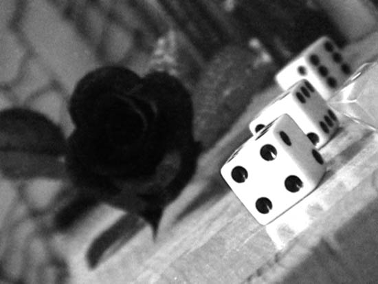 Dice, rose Black and white photography