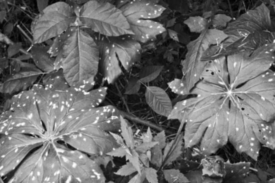 Leaves black and white photography
