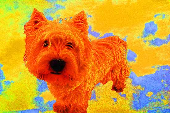 Puppy Thermal Imaging