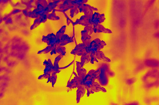 Leaves Thermal Imaging