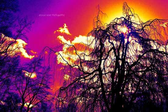 NatureThermal Imaging