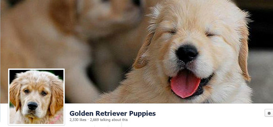 Golden Puppies Timeline Cover
