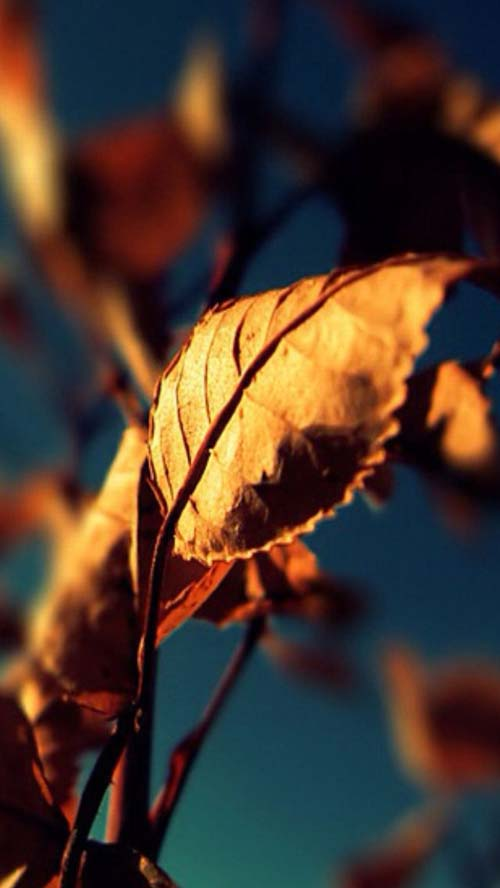 iphone5-wallpapers-27