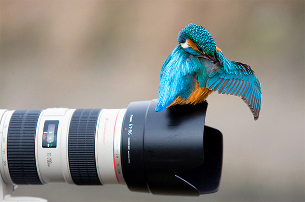Perfectly Timed Animal Photos