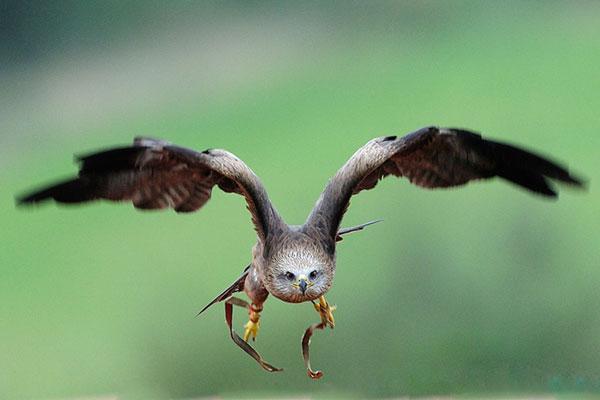 1-eagle-flying
