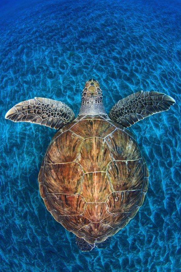 17-Turtle Gem
