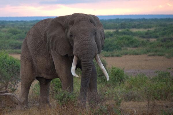 4-kenya-wildlife