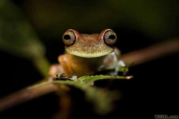 42-Tree Frog