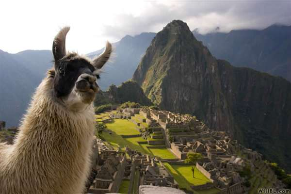 45-Llama, Machu Picchu