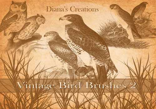 Vintage Bird Brushes 2