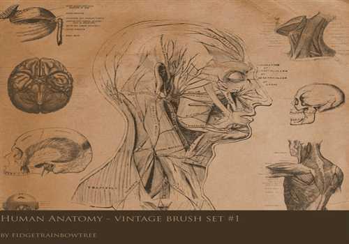 Vintage Anatomy Set 1