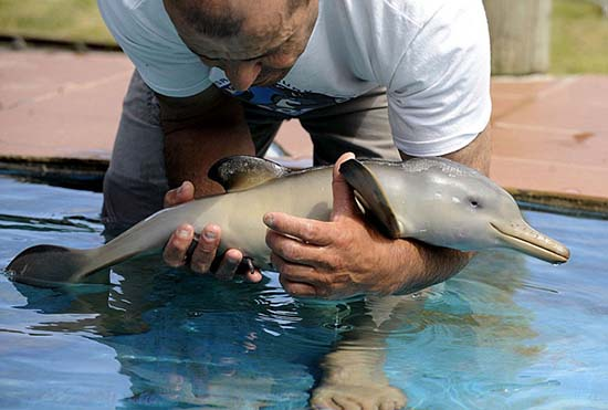 10. Baby Dolphin