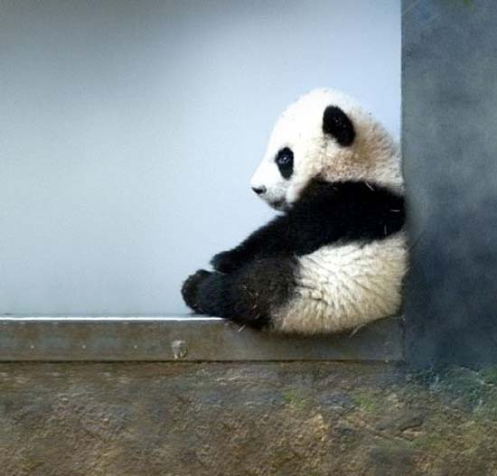 12. Baby Panda