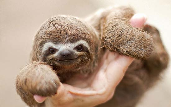 16. Baby Sloth