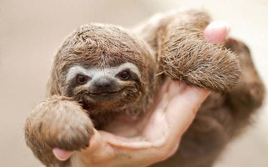 16. Baby Sloth