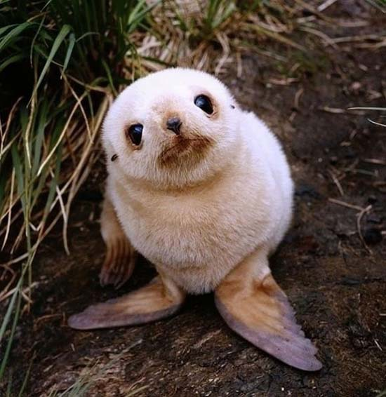 17. Baby Seal