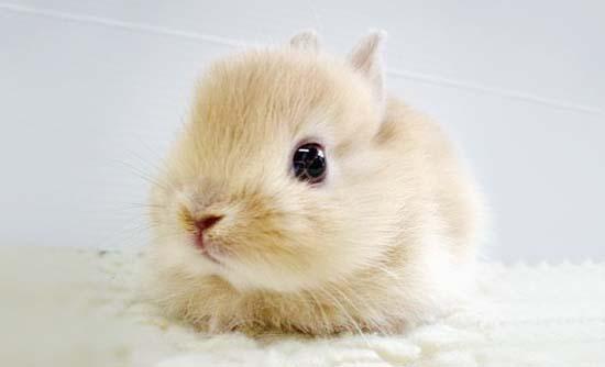 19. Bunny