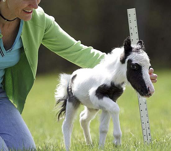 25. Foal