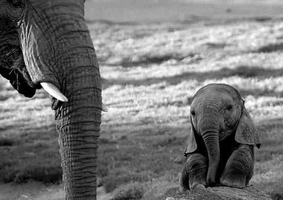 3. Baby Elephant