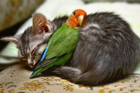 31. parrot-cat