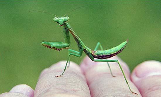 32. Mantis Magic Moment