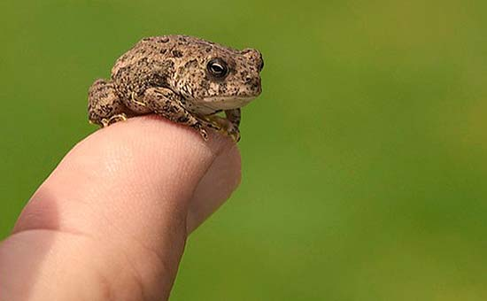 33.Tiny Toad on Top