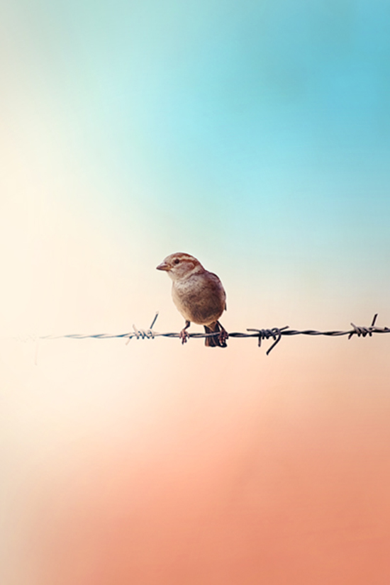 38. Sparrow