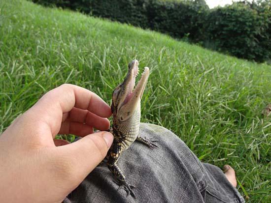 4. Baby Crocodile