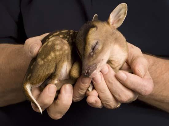 6. Baby Deer