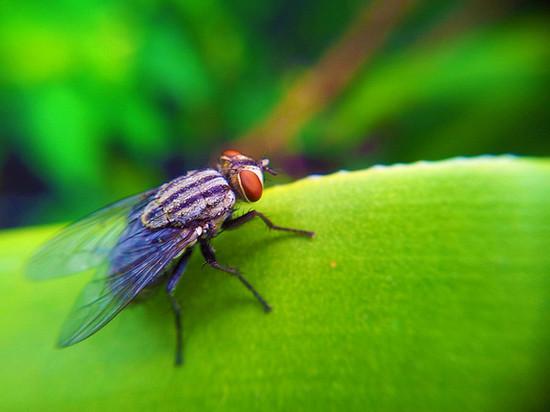 House Fly taken using Samsung Galaxy S2 Camera + Macro Lens